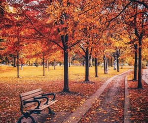 autumn, park, and tree image