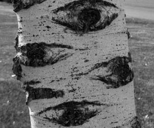eyes, tree, and nature image