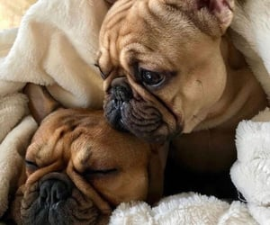 dogs, inspiration, and lovely image