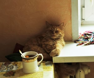 cat and tea image