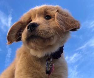 dog, animal, and sky image