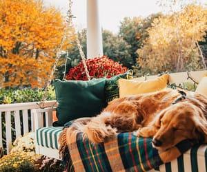 autumn and dog image