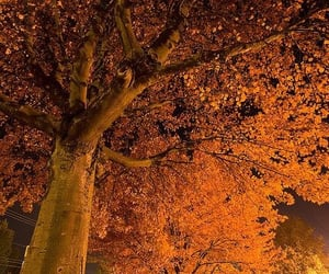 autumn, fall, and night image