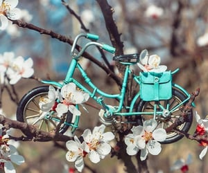 bicycle, flowers, and turqoise image
