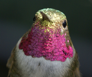 bird, pink, and gold image