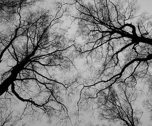 autumn, black, and dark image