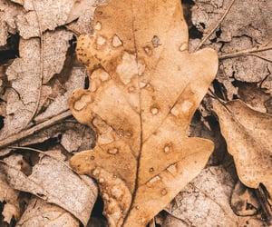 acorns, autumn, and fall image