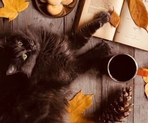 cat, autumn, and book image