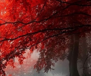 autumn, red, and fall image