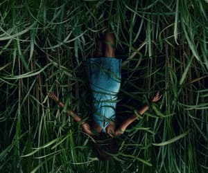 horror, tall grass, and Stephen King image