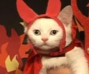 cat, Devil, and Halloween image