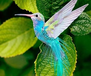 animals, beautiful, and colorful image