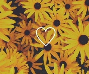 wallpaper, yellow, and flowers image