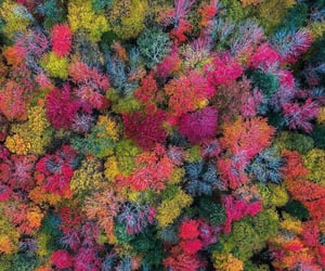 tree, colorful, and colors image