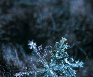 close up, cold, and frozen image