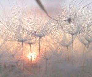 dandelion, sun, and nature image
