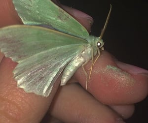green, green aesthetic, and moth image