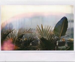 cool, nice, and plants image