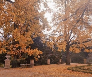 autumn, fall, and garden image
