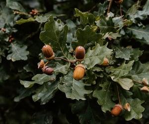 acorns, autumn, and october image