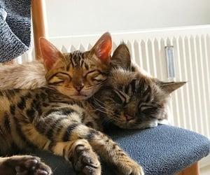 Animal kingdom, kitties, and cute image