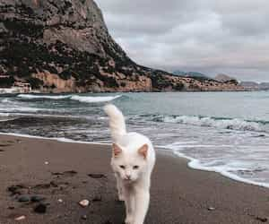 black sea, cat, and nature image
