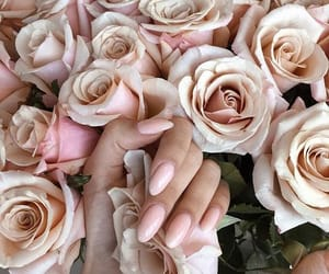 aesthetic, beauty, and bloom image