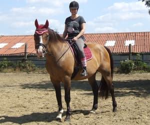 equestrian, ride, and riding image