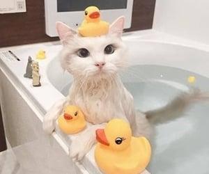 cat, animal, and bath image