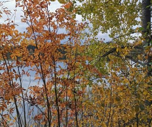 autumn, fall, and finland image