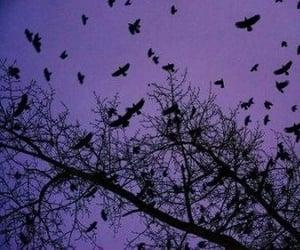 birds, purple, and tree image