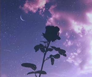 rose, stars, and flowers image