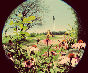 butterfly, fisheye, and flowers image