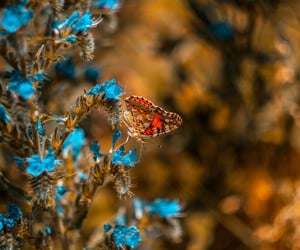 animal, blue, and butterfly image