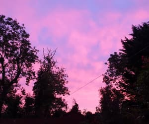 autumn, nature, and pink image
