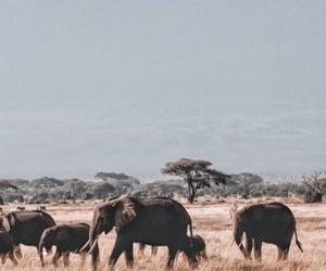 animal, africa, and elephant image