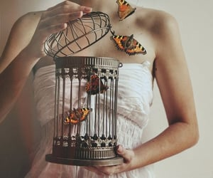 butterfly, cage, and art image