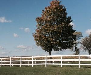 farm, farmland, and grass image