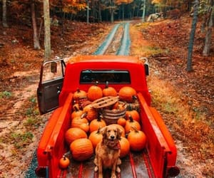 pumpkin, autumn, and dog image