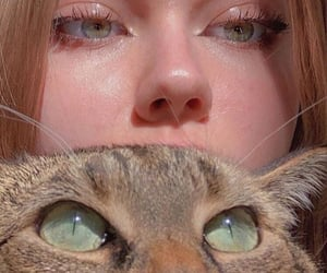 aesthetic, beauty, and cat image