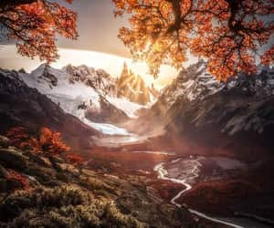argentina, travel, and trees image