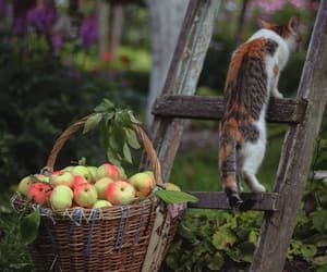 animals, apples, and cat image