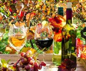 dried leaves, orchard, and drinks image