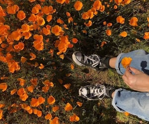 flowers, jeans, and orange image