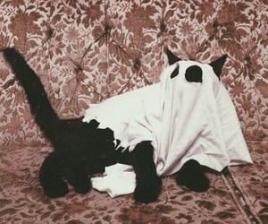 cat, Halloween, and ghost image