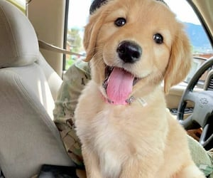 animals, happy, and dog image