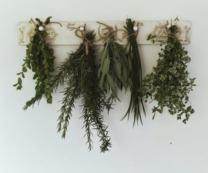 chives, herbarium, and herbs image