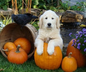 autumn, colorful, and dog image