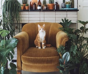 cat, plants, and kitty image