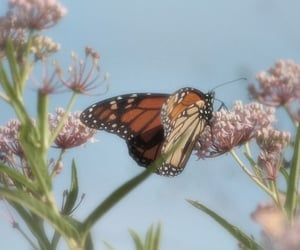 animals, blurry, and butterflies image